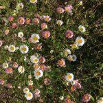 小才角の花